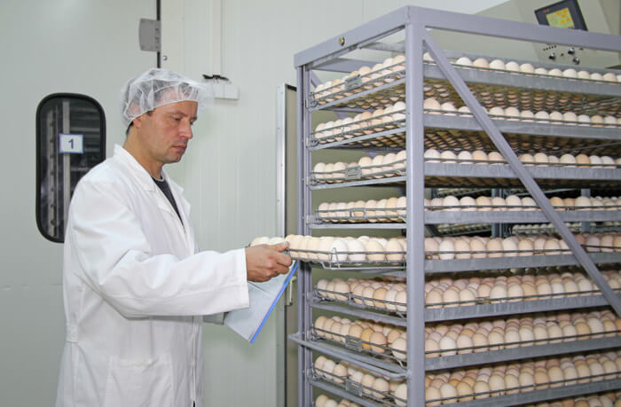 Antibacterial film application - egg production unit
